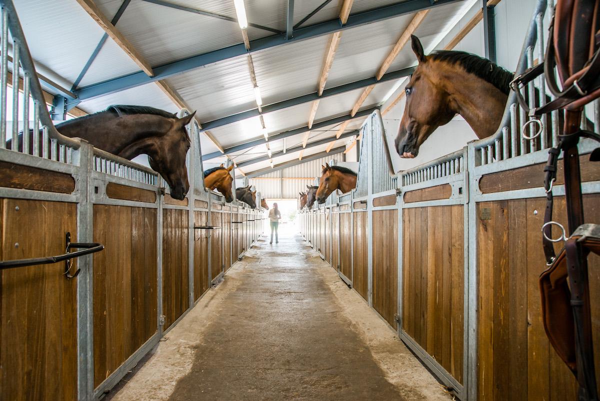 Indoor Stables Dutch Stables Stallenbouw